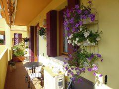Rif. 1058 Splendido Mini Appartamento con terrazza