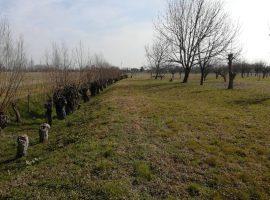 Rif. 1101 Terreno agricolo a Galta